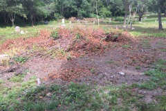 Plot 47 in under this pile of Japanese Knotweed.  This pile was created by volunteers.